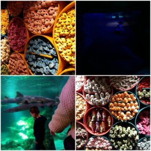 legoland en sealife