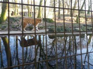 dagboek dierentuin teiger